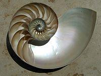 200px-NautilusCutawayLogarithmicSpiral