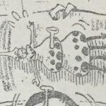 【ワンピース】キノコビトの様子がなんともグロテスクな件、またはマンティコラについて。